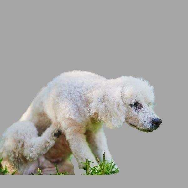 Revitalise Animal Skin Spray helps keep your pets safe